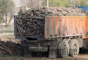 انهدام باند بزرگ قاچاق چوبهای جنگلی در مازندران